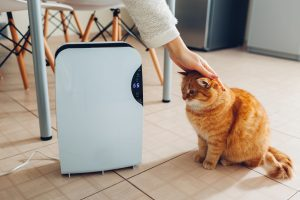 air purifier with cat