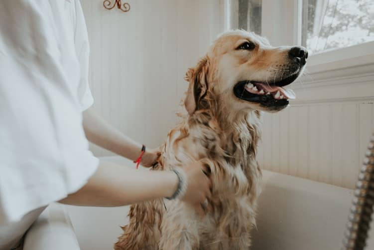 Pet Groomers Need Dehumidifiers to Keep Their Salons Safe for Pets